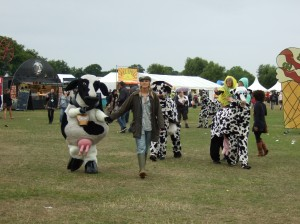 Cows (credit Gemma Davis)